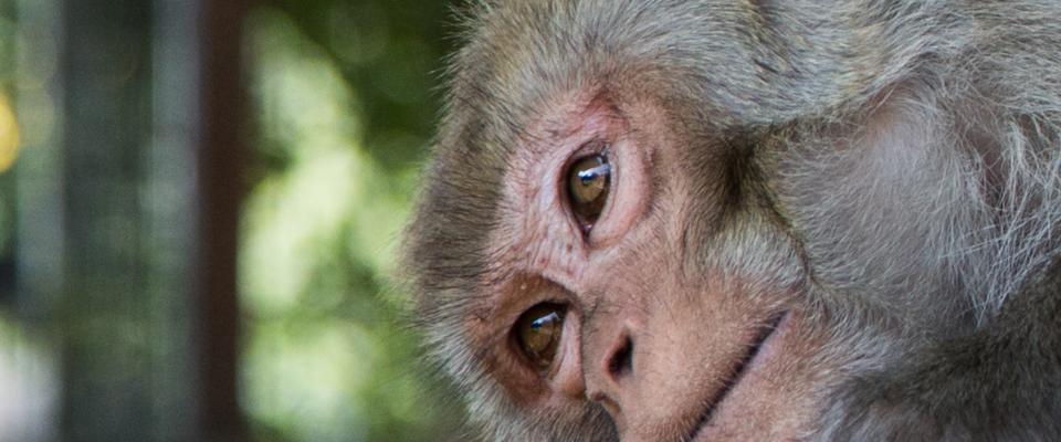 MMPS_Monkey-2